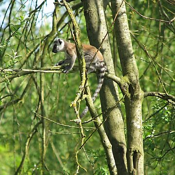 Ring-Tailed Lemur baby by as2ae