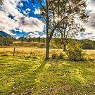 Countryside Australia by Kim Austin