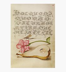 Vintage Flower Calligraphy Alphabet Photographic Print