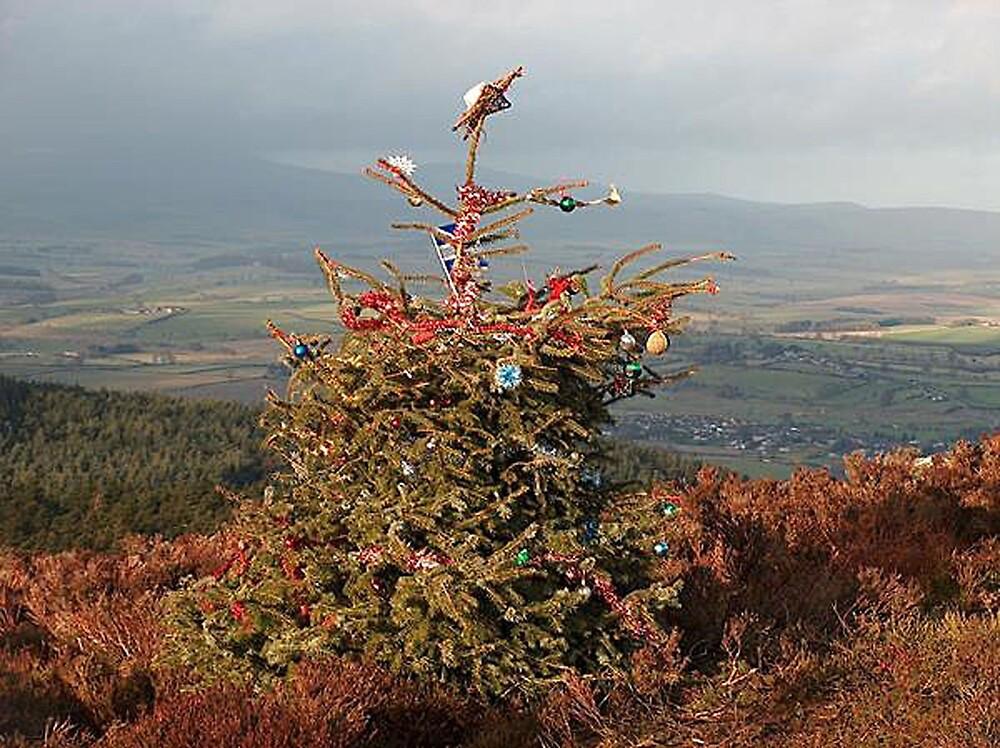 Christmas Tree on Simonside Northumberland by EternalRainbow