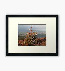 Christmas Tree on Simonside Northumberland Framed Print