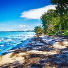Banksia Beach, Bribie Island, Australia by Kim Austin