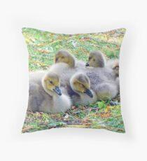 Five Canada Goslings Throw Pillow