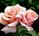 a pair of perfect pink roses by Beth Brightman