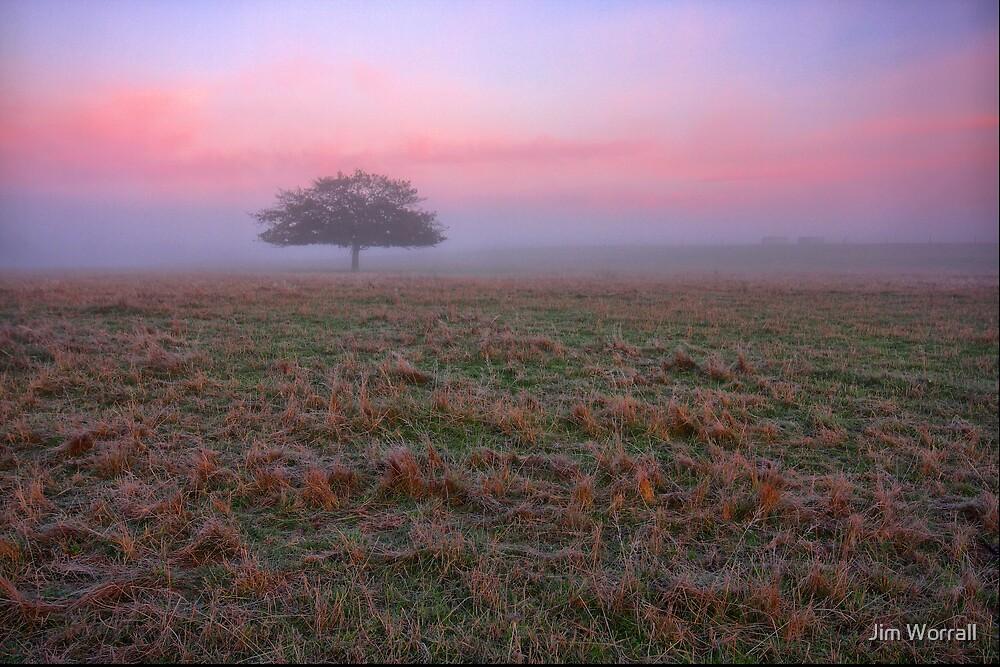 Velvet Morning by Jim Worrall