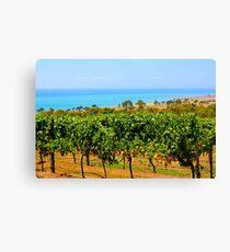 Bellarine vineyards Canvas Print