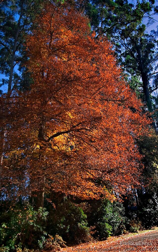 Autumn in the Nicholas Gardens by FuriousEnnui