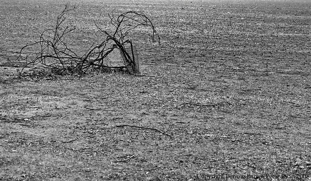 Wimmera Drought BW by FuriousEnnui