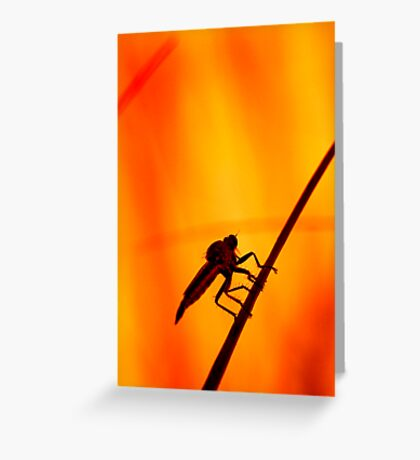 Robberfly Greeting Card