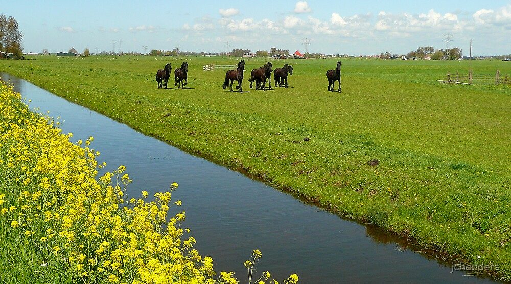 Polderland with black Friesians by jchanders