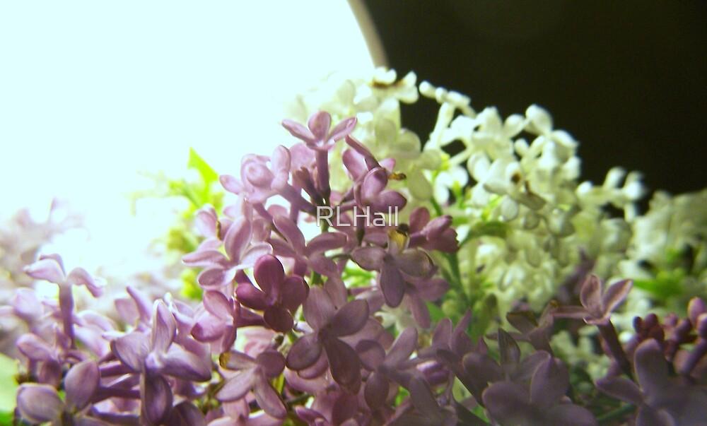 Lilac Light by RLHall