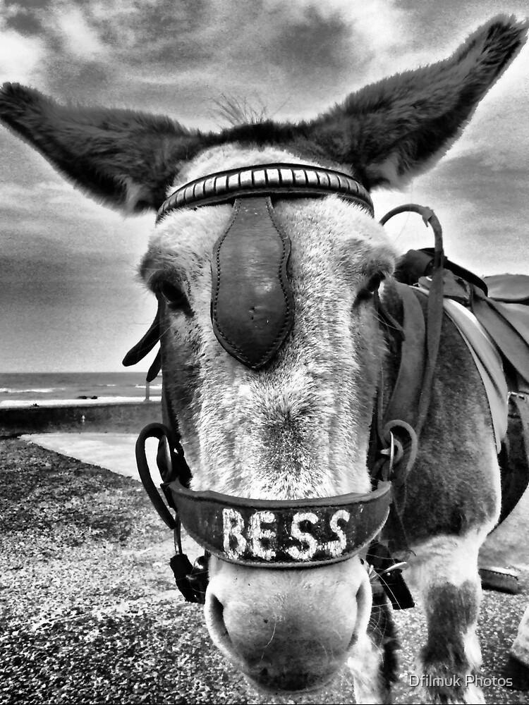 Donkey HDR by Dfilmuk Photos