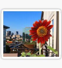 Sunflower over Nashville Sticker