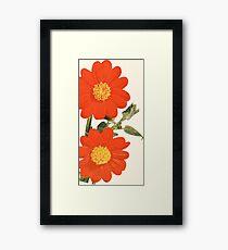 Mexican Sunflower (Summer) Framed Print