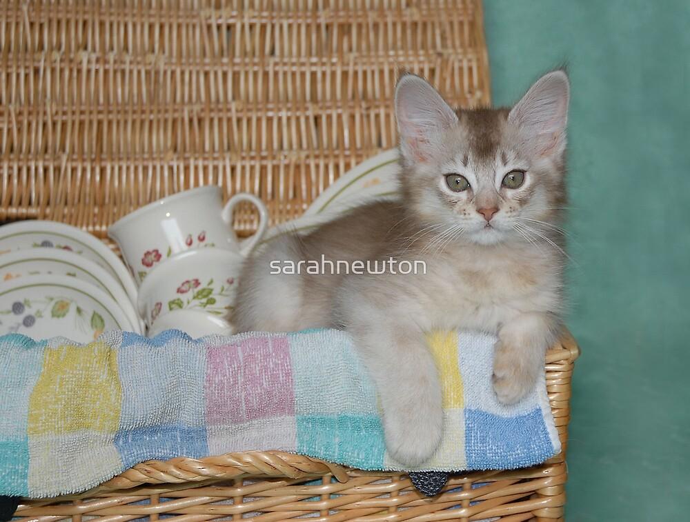 kitten's picnic by sarahnewton