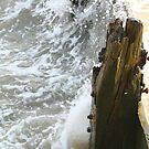 Splash Back by surferboy58