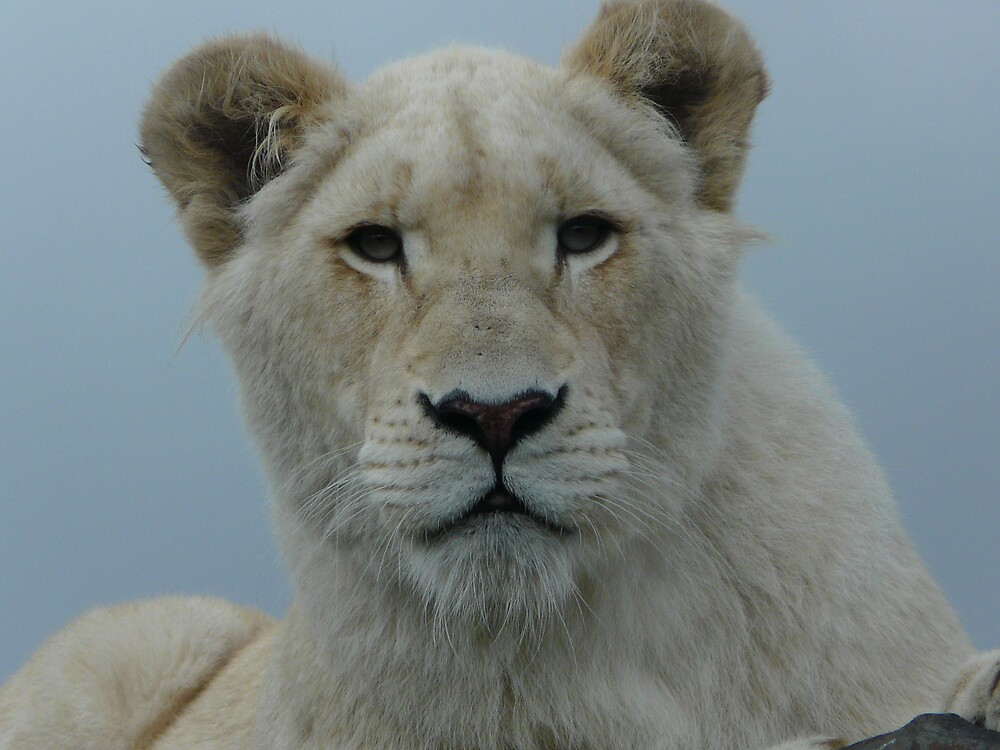 White Lioness by Yeksel