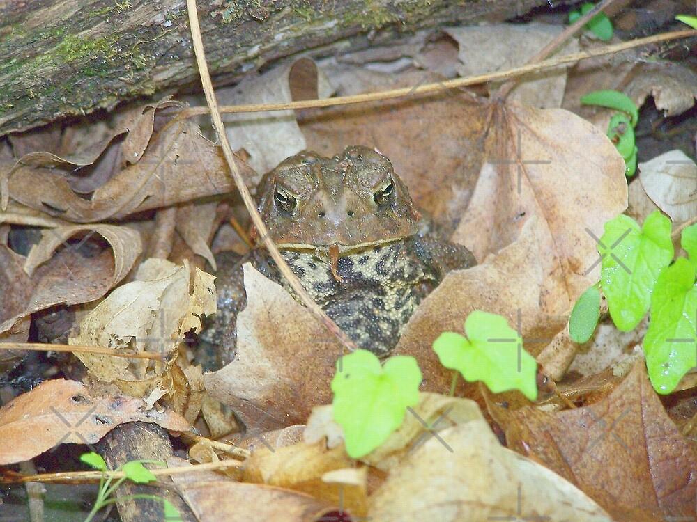 Friendly Toad by natnat7w