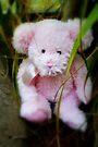 Ein abenteuerlicher Teddy von Evita