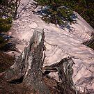 Broken Stump on Dam Hill by Yukondick