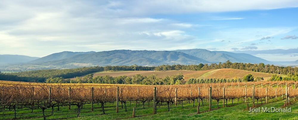 Yarra Vally Vines by Joel McDonald