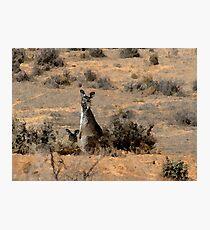 """Watercoloured""  kangaroos Photographic Print"