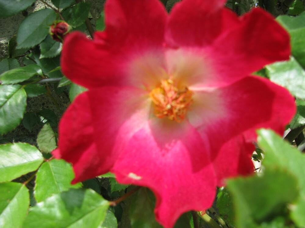 Fringed Flower by Brendisima