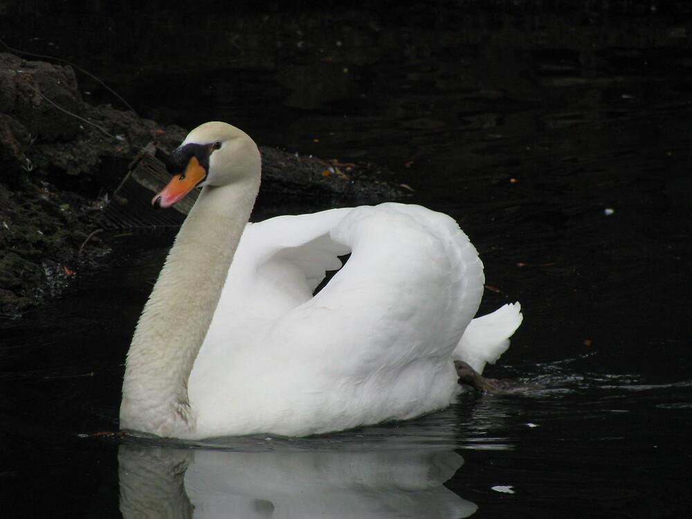 I Swan by Brendisima