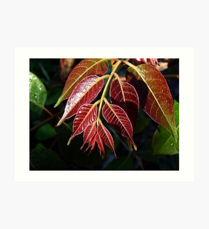 Red Cedar Leaf.... Art Print