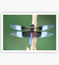 Male Widow Skimmer Sticker