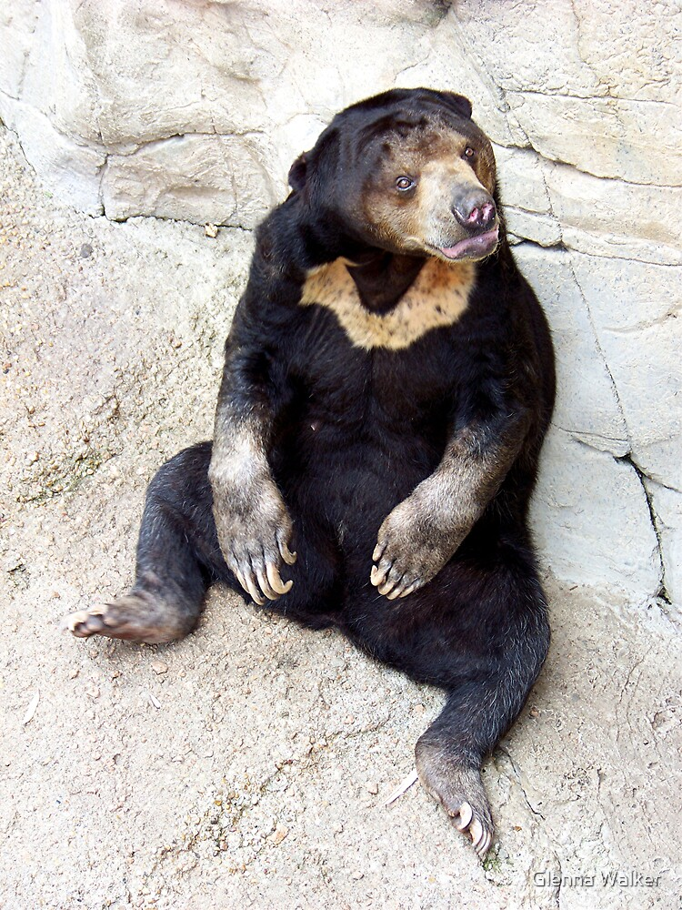 Malayan Sun Bear by Glenna Walker