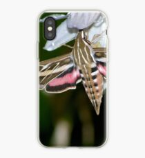 Drinking from Hosta Flowers iPhone Case