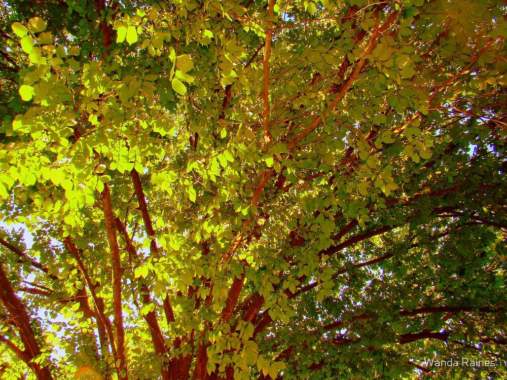 Sun Glowing Tree by Wanda Raines