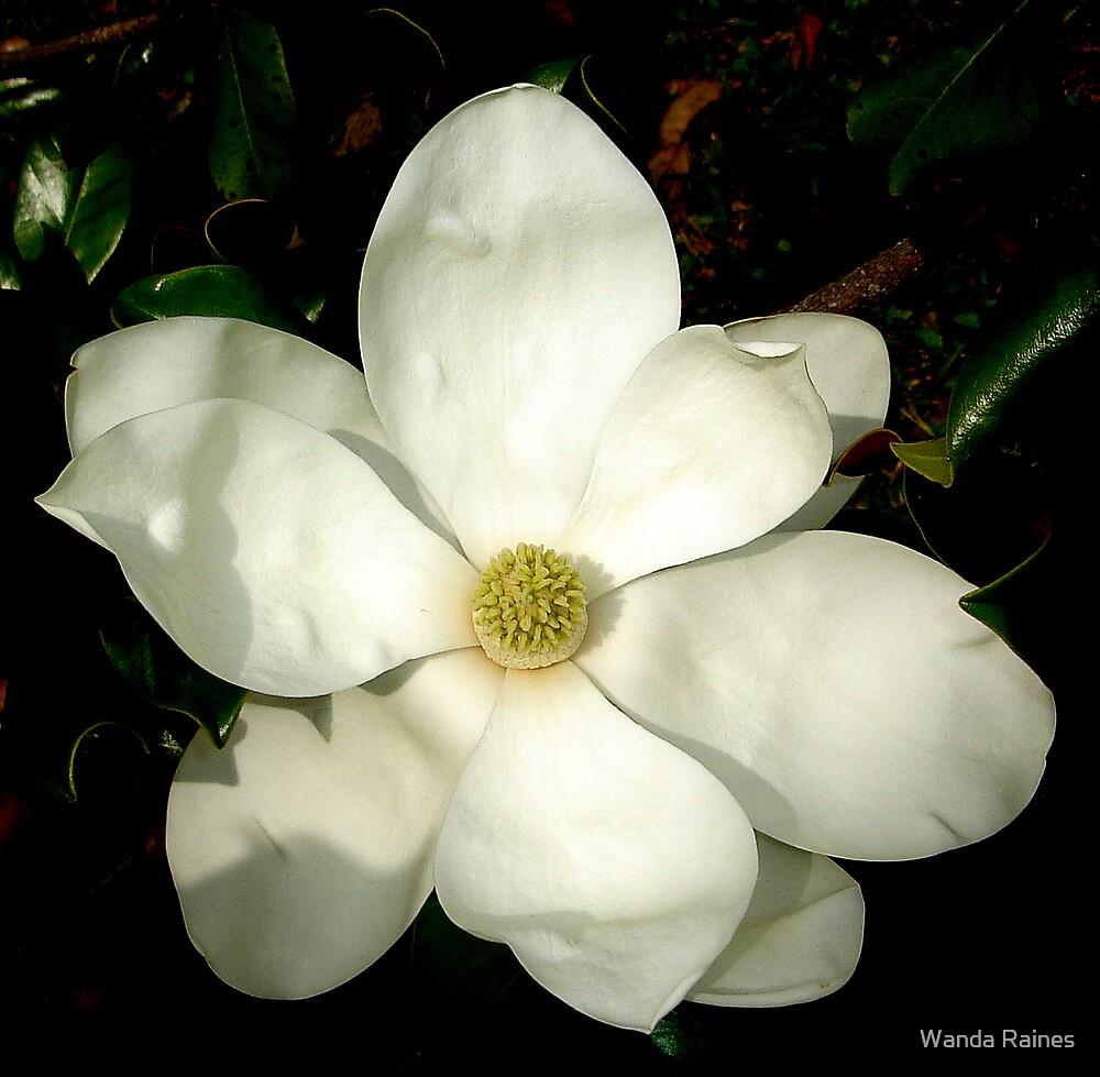 Magnolia by Wanda Raines