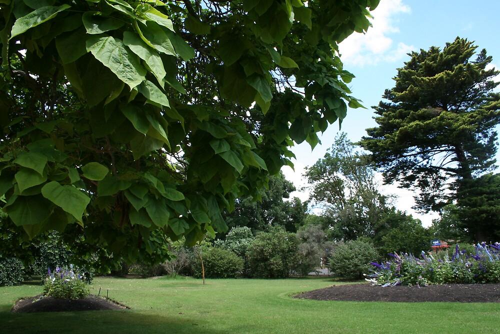 botanic garden by sherryn pitt