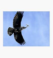 Raven - Melbourne Photographic Print