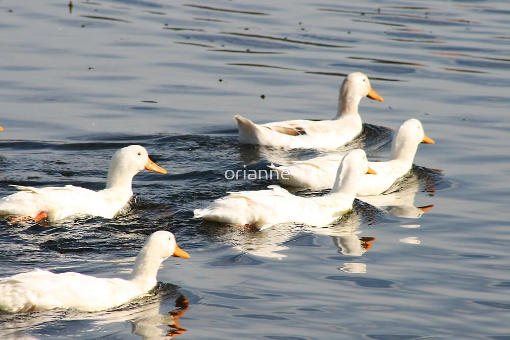 Duck Race by orianne