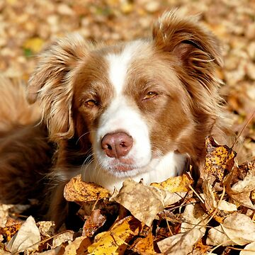 Border Collie - Autumn Leaves by AndreaEL