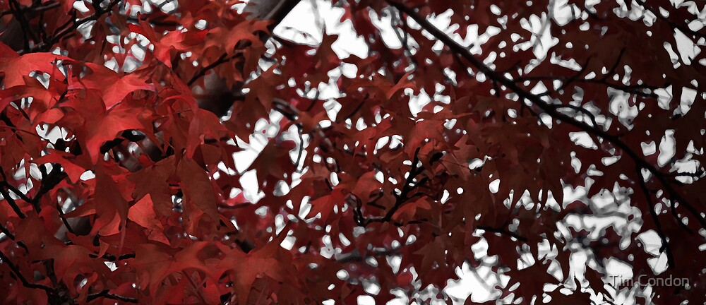 Autumn Reds by Tim Condon