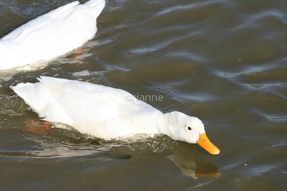 Duck charge by orianne
