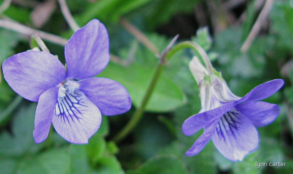 Violets Are Blue - Lyme , Dorset , Uk by lynn carter