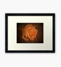 Rose Vignette Framed Print
