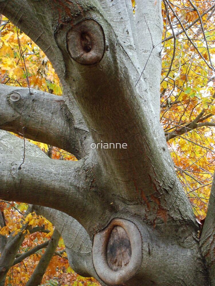 Tree Body by orianne