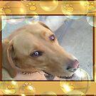 Beautiful Gypsy Canine by judygal