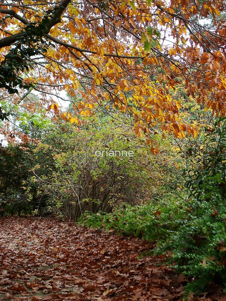 Leaf Path by orianne