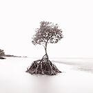 Yule's Point.....Queensland by Imi Koetz