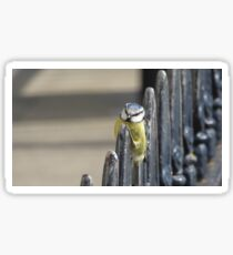 Blue Tit Resting On Metal Fence Railing Sticker