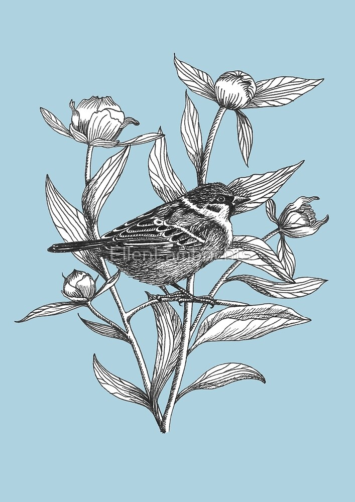 ink sparrow and peonies on blue background by EllenLambrichts