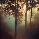 Fog Pit - Forest Sunrise in November by Dirk Wuestenhagen
