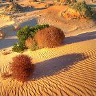 Mungo landscape by Kevin McGennan